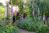 Beete mit Fingerhut und Jungfer im Grünen im Cottage Garten
