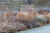 Winterliches Staudenbeet im Rauhreif