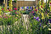 Blühende Beete mit Glockenblumen, Königskerze und Lavendel
