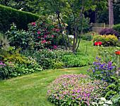 Rasenweg zwischen Beeten mit Rhododendron, Storchschnabel und Mohn