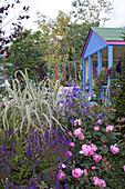 Beet mit Rose, Glockenblume, Steppen-Salbei und weißbuntem Pfahlrohr vor Gartenhaus