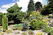Steingarten mit Koniferen und alpinen Stauden