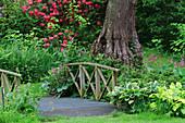 Schattengarten mit Rhododendron, Funkien und Brücke