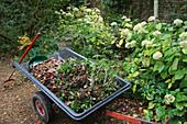 Herbstarbeiten im Garten
