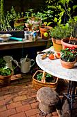 Chili, Zitronenthymian und Zitrus auf Balkontisch