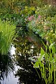 Teich mit Uferbepflanzung