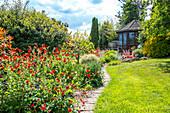 Rot blühende Nelkenwurz 'Feuerball' am Weg zum Gartenhaus