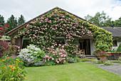 Haus mit Ramblerrosen bewachsen