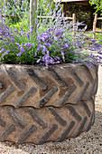 Mit Lavendel bepflanzte Traktorreifen
