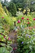 Naturgarten mit Schlafmohn, Angelika-Pflanze, Storchschnabel