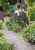 Topf-Arrangement am Gartenzaun mit blühender Lilie