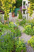 Garten mit Gold-Ulmen, Frauenmantel, Kiesweg zwischen Beeten