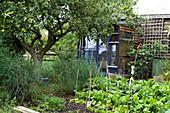Gemüsegarten mit Apfelbaum und Gartenhaus