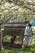 Portabler Hühnerstall unter blühenden Apfelbäumen