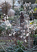 Garten im Winter mit Silbertaler und Distel