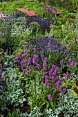 Beet mit Lavendel, Ziest und Silberraute