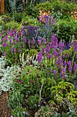 Beet mit Lavendel, Ziest, Witwenblume und Kugeldistel