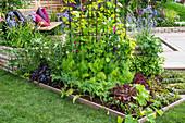 Kleines Beet mit Kräutern und Gemüse an der Terrasse