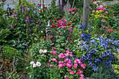 Rosen, Klematis 'Juuli' und Fingerhut mit Blumenelfe