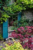 Japanischer Fächerahorn, Spiegel und Blauregen am Haus