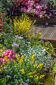 Beet mit Ginster, Azalee, Zistrose und Säckelblume