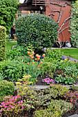 Schrebergarten im Frühling mit Azaleen und Tulpen