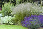 Lavendel 'Hidcote Blue' mit Federgras und Schwarznessel