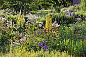 Naturgarten mit Königskerze, Indianernessel, Rittersporn und Baldrian