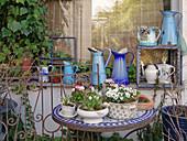 Frühlings-Arrangement mit Hornveilchen, Tausendschön und weißen Traubenhyazinthen
