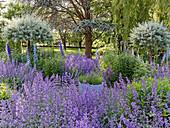 Garten mit Katzenminze, Rittersporn und Weidenstämmchen