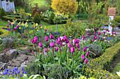 Frühlingsbeet mit Tulpen