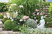 Englische Rosen 'Wild Eve' 'Gertrude Jekyll' mit Buchs und Heiligenkraut vor Chinaschilf