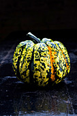 A green-and-yellow flecked pumpkin