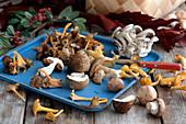 Verschiedene frische Pilze