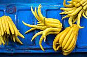 Finger lemons on a blue background