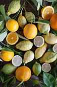 Various organic citrus fruit with leaves on a rustic table