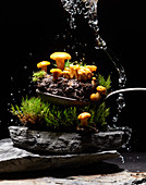 Chanterelles with earth and moss on a spoon and a slate plate under a water splash
