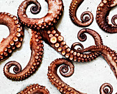 Octopus tentacles (seen from above)