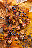 Roasted chestnuts with grapes (ornamental wine) and autumn leaves