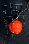 A hokkaido pumpkin, grown into wire mesh