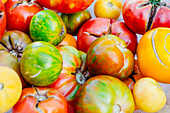 A variety of homegrown tomatoes, ranging in color from green and yellow striped to red and green to pure red