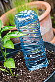 Selbstgemachte Bewässerung mit Plastikflasche