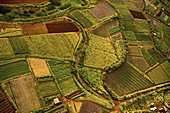 Fields in Hawaii, aerial photograph