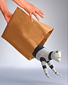 Letting the robot cat out of the bag, illustration