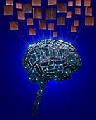 Digital human brain and neurons, illustration