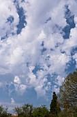 Altocumulus floccus clouds