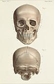 Skull anatomy, 1866 illustrations