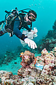 Scuba diver collecting waste plastic bottle