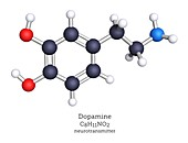 Dopamine neurotransmitter, molecular model
