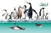 Extinct and living penguins, illustration